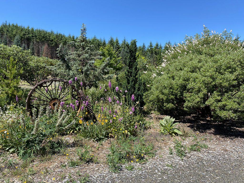 Dry meadow/shrub gar