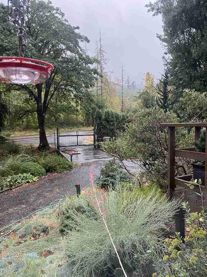 Wet soil, falling rain